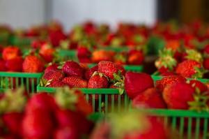strawberries-828919_640
