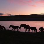 O Wyżynie Mongolskiej