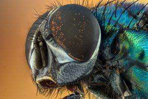 Jak się bronić przed owadami?
